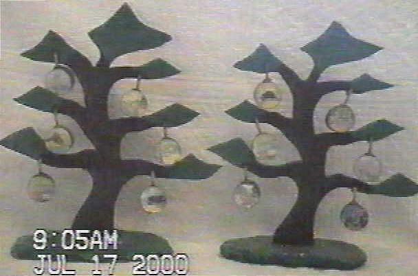 Wild Life Trees